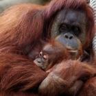 LC_Jardim_Zoológico_Viagem_Sudeste_Asiático