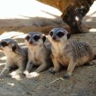 LC_blog_Dia_Animal_Jardim_Zoologico_descontos_surpresas
