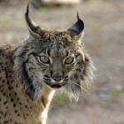 LC_Blog_Quartas Feiras Selvagens Jardim Zoológico