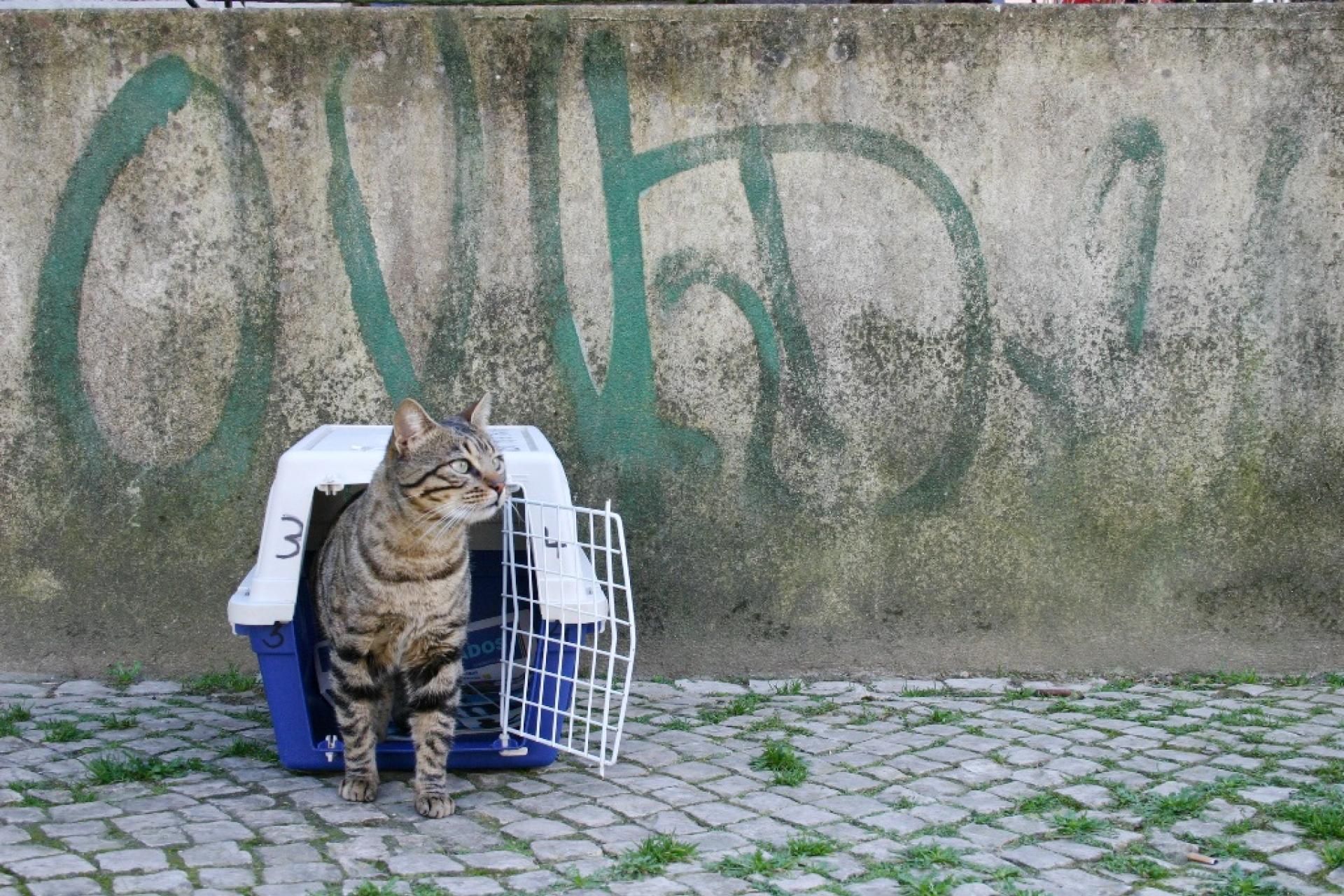 LisboaCool_Blog_Patrulha Gato - um projeto pioneiro