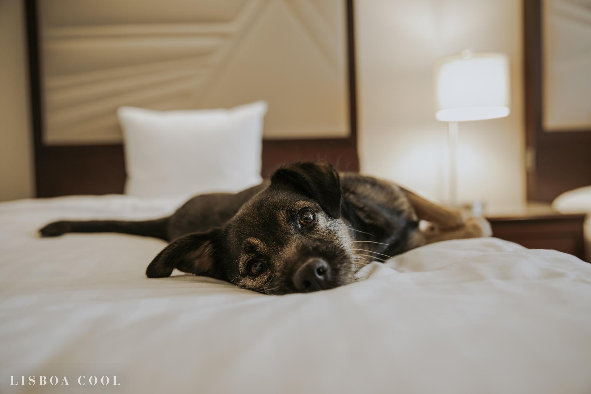 LC_blog_Lisbon_Marriott_Hotel_Pet_Friendly