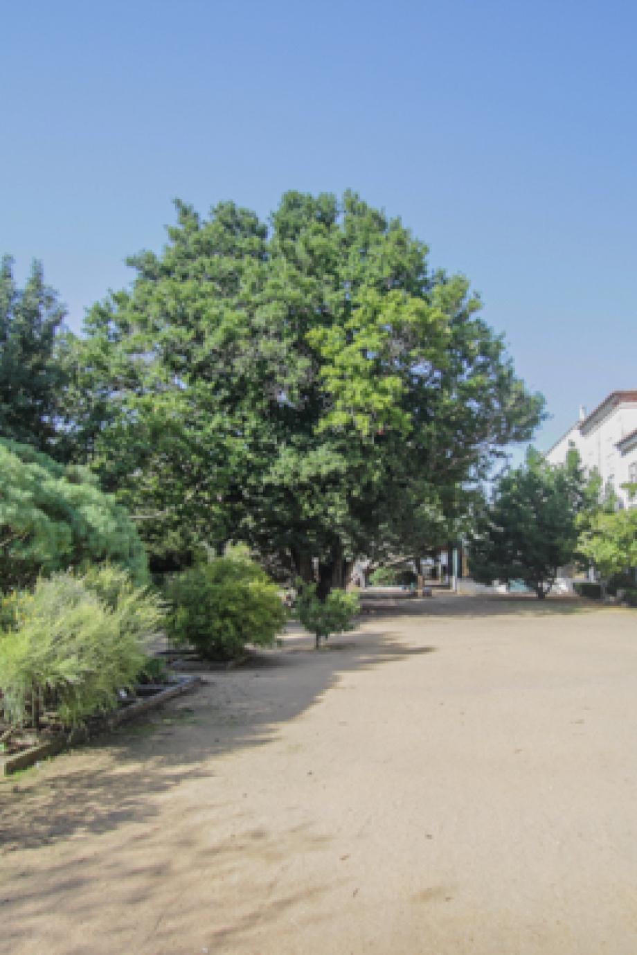 LisboaCool_Visitar_Jardim Botânico da Ajuda