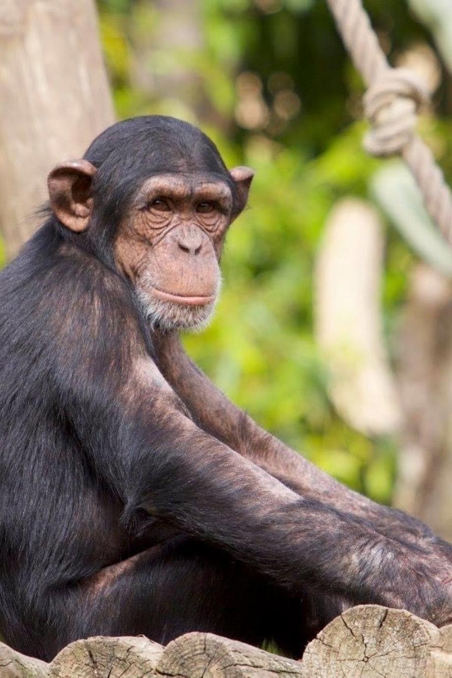 LC_Blog_Dia Mundial dos Avós Jardim Zoológico