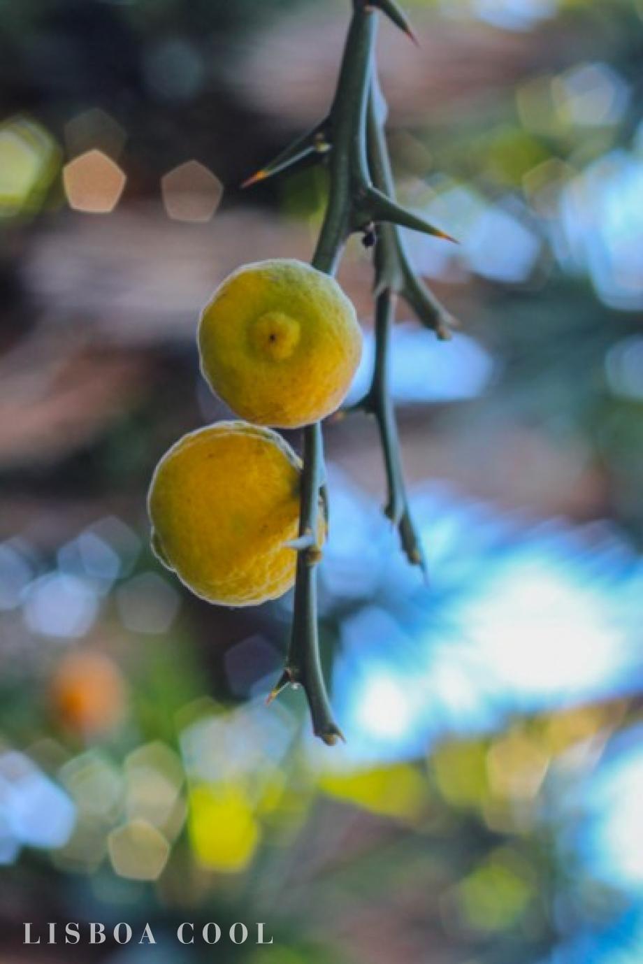jardim vertical lisboa:Jardim Botânico
